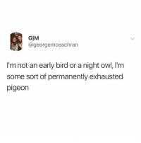Relatable, Owl, and Pigeon: GIM  @georgemceachran  I'm not an early bird or a night owl, I'm  some sort of permanently exhausted  pigeon Unfortunately this is very relatable
