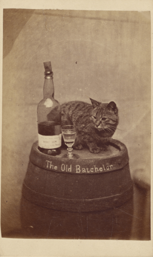 thegetty:  More impressive than this cat drinking half a bottle of gin, is that he managed to get that cork back in the bottle.  Stud: GIN  The Old Batchela thegetty:  More impressive than this cat drinking half a bottle of gin, is that he managed to get that cork back in the bottle.  Stud