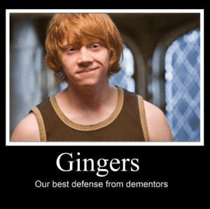 Ron Weasley Memes   Harry Potter Amino: Gingers  Our best defense from dementors Ron Weasley Memes   Harry Potter Amino