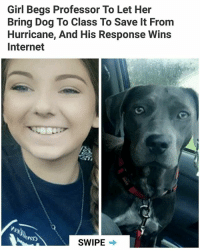 Internet, Memes, and Girl: Girl Begs Professor To Let Her  Bring Dog To Class To Save It From  Hurricane, And His Response Wins  Internet  SWIPE Good professor 👍 | Follow @HandpickedHighlights for awesome daily highlights👌