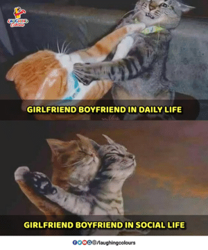 Life, Girlfriend, and Boyfriend: GIRLFRIEND BOYFRIEND IN DAILY LIFE  GIRLFRIEND BOYFRIEND IN SOCIAL LIFE  0OOOB/laughingcolours
