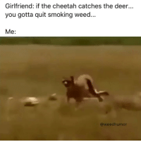 Deer, Smoking, and Weed: Girlfriend: if the cheetah catches the deer..  you gotta quit smoking weed.  Me:  @weedhumor Dead 😂😭💀