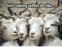 Cats, Girls, and Memes: Girls  taking selfies belike... Sundays are a free FUR all here at C.A.A. - Cat Addicts Anony-mouse.