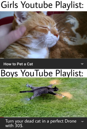 Drone: Girls Youtube Playlist:  Fantino benedetto  How to Pet a Cat  Boys YouTube Playlist:  Fanting benedetto  Turn your dead cat in a perfect Drone  with 30$