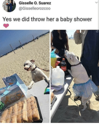 Memes, Shower, and Baby Shower: Gisselle O. Suarez  @Gisselleorozcoo  Yes we did throw her a baby shower @puppiesbetch is one of my favourite accounts right now ❤