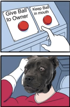 Hardest choice ever.: Give Ball Keep Ball  in mouth  to Owner Hardest choice ever.