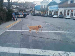 givemeinternet:  A strong independent dog who don't need no man : givemeinternet:  A strong independent dog who don't need no man