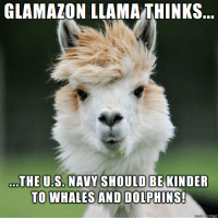 Kindness as expressed towards others is an admirable behavior for all creatures.: GLAMAZON LLAMA THINKS  THE US NAVYSHOULD BE KINDER  TO WHALES AND DOLPHINS!  Inngur Kindness as expressed towards others is an admirable behavior for all creatures.