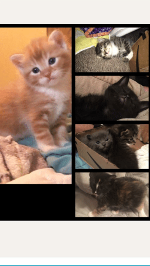 Kittens, Old, and Glamour Shots: Glamour shots of 4 1/2 week old foster kittens