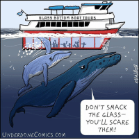 "Children, Memes, and Scare: GLASSBOTTOM BOAT TO u RS  DON'T SMACK  THE GLASS  YOU'LL SCARE  THEM!  UNDERDONECOMICS.COM WorldOceansDay is June 8. So let's start off WorldOceansWeek with an old favorite mischievous humpback calf. 🐋🐋 It's been recently reported that humpback babies make some ""whispers"" to their mothers as they swim together. But noise pollution might be getting in the way of the communication! 🐋 humpback whale humpbackwhale whalewatching ocean saveouroceans boat boating conservation nature comic webcomic comicstrip cartoon dailycomic beach glassbottomboat kids parenting parenthood children aquarium motherhood mom"