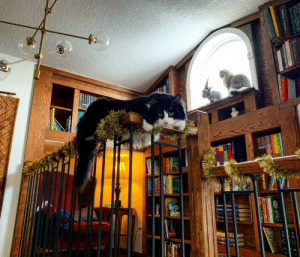 This floof sprawled over the banister of the library I built for the kids (but which the kittehs have now claimed as their own).: Glenco  Culloden  The Origin of SpeciesB  HANDBOOK  WARNER AEERTA  ma PILOSOPHER S  KELLY GALLAGHER WRITE LIKE THIS  CAPTOL  Rbet farton olees  O THE LORE OF SHIPS  AniCu CLAW  AniCus CLA  ATTICUS CLAW  ATEICUS CLA  FIFIM  TERHY PRATCHETT MS oHAS HANDAnnK  TERRY  THE FLIGHET GIK  ATRIS  MARTNS  1NTERSA  TIAGON  TOM BONBINS  MAR  SAM HARRIS  LANDERAPE  TRICIAINTODE  w ARTemis FauL This floof sprawled over the banister of the library I built for the kids (but which the kittehs have now claimed as their own).