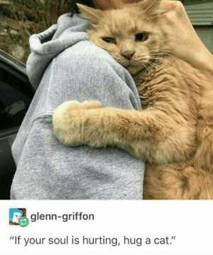 "Glenn: glenn-griffon  ""If your soul is hurting, hug a cat."""