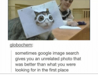 Google, Head, and Google Image Search: globochem:  sometimes google image search  gives you an unrelated photo that  was better than what you were  looking for in the first place I just wounder whats going through the cats head.