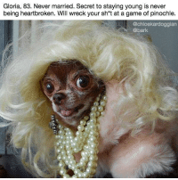 Memes, Chanel, and Game: Gloria, 83. Never married. Secret to staying young is never  being heartbroken. Will wreck your sh*t at a game of pinochle.  @chloekardoggian  @bark Smells like Chanel No. 5 at all times. dogbios barkbios @chloekardoggian