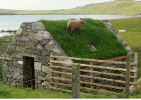 glumshoe:  changingmorphologies:   wizardscience:  fuzzypetal: What if that was your houseWhat if a sheep lives off the grass on your house ideal  I don't know what to tell ya, b'ys. This is a root cellar.   what if I was a potato ideal : glumshoe:  changingmorphologies:   wizardscience:  fuzzypetal: What if that was your houseWhat if a sheep lives off the grass on your house ideal  I don't know what to tell ya, b'ys. This is a root cellar.   what if I was a potato ideal