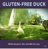 Cave ducks ate mostly algae and swamp grasses.: GLUTEN-FREE DUCK  White bread is, like, horrible for you. Cave ducks ate mostly algae and swamp grasses.