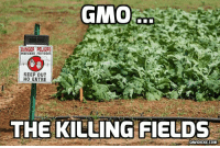 Memes, Brazil, and 🤖: GMO  DANGER PELIGRO  PESTICIDES PESTICIDAS  KEEP OUT  NO ENTRE  THE KILLING FIELDS Brazil may soon refuse all GMO imports from the United States http://bit.ly/2kkjD5O #GMO