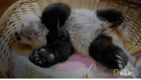 Gmorning.  Did you also forget to get the lifetime warranty for your peace of mind? Saaaaame Here I got some home remedy sh*t *opens bag full of creams, alcolado, encouragement, distractions, this gif of a baby panda* https://t.co/SocbtokAgs: Gmorning.  Did you also forget to get the lifetime warranty for your peace of mind? Saaaaame Here I got some home remedy sh*t *opens bag full of creams, alcolado, encouragement, distractions, this gif of a baby panda* https://t.co/SocbtokAgs
