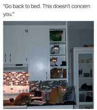 "Bitch, Memes, and Twitter: ""Go back to bed. This doesn't concern  you."" Hiss off bitch (Twitter: Richard_Kadrey)"