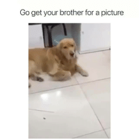 Memes, A Picture, and 🤖: Go get your brother for a picture