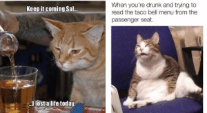 Go home, cat. You're drunk.#cats 3catmemes #funnycats 3drunkmemes #cutecats #funnymemes #animalmemes: Go home, cat. You're drunk.#cats 3catmemes #funnycats 3drunkmemes #cutecats #funnymemes #animalmemes