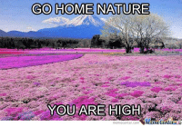 Go home, nature!