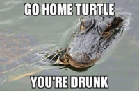 GO HOME TURTL  YOURE DRUNK 'Go home turtle, you are drunk'.