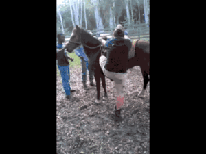 Go horse riding they said. It will be fun they said…omg-humor.tumblr.com: Go horse riding they said. It will be fun they said…omg-humor.tumblr.com