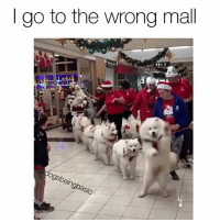 Beard, Memes, and Pup: go to the wrong mall  dogsbeingbasic First off, AmazonPrime, second off... last time I saw a mall Santa his beard was fake, but these dogs though! Pup @miss_poppet_the_samoyed