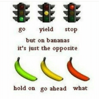 Dank Memes, Red, and Bananas: go  yield  stop  but on bananas  it's just the opposite  hold on go ahead what I'd shove a red banana up my ass u till it turned ripe.enough
