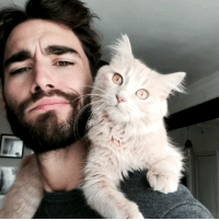 Goals, Memes, and 🤖: Goals: being so in sync even your mannerisms are the same. 😻 . . (📹: @nicolassimoes) catsofig catgram catstagram kittycat catlovers catdad adoptapet catoftheday