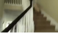 Bad, Love, and Tumblr: goatyellsateverything:  rockytop-love:  shoothikedrinkfuck:  weloveshortvideos:  When mom says dinner is ready   Sweet angel no  Can we all just appreciate the fact that this cutie just fell down the stairs but still immediately got up so excited like he just had a great time falling down the stairs? Like I want to handle bad things as well as this puppy does  Thats pretty standard for a Lab.