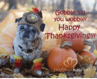 Dearest friends! We are wishing for you all the good things in life...today and everyday <3 <3 <3. Happy Thanksgiving!!! Love you all to pieces <3 <3 <3 The Pugs and Kisses Family Special thanks to PugsNGiggles www.etsy.com/shop/pugsngiggles for Zoe's adorable turkey outfit. And Elizabeth Howard Puglisi for her beautiful necklaces. So cute!!!: Gobble till  you wobble!  Happy  Thanksgiving!!!  pu8S and kiss Dearest friends! We are wishing for you all the good things in life...today and everyday <3 <3 <3. Happy Thanksgiving!!! Love you all to pieces <3 <3 <3 The Pugs and Kisses Family Special thanks to PugsNGiggles www.etsy.com/shop/pugsngiggles for Zoe's adorable turkey outfit. And Elizabeth Howard Puglisi for her beautiful necklaces. So cute!!!