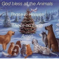 For more awesome holiday and fun pictures go to... www.snowflakescottage.com: God bless all the Animals  Those in Heaven  Those on Earth  Amen For more awesome holiday and fun pictures go to... www.snowflakescottage.com