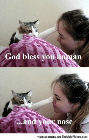 Club, God, and Tumblr: God bless vou hunan  ..and your  nose  you should probably go to TheMetaPicture.com laughoutloud-club:  Holy Cat Will Save Us All