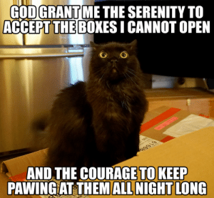 omg-images:  Cat paradox: GODGRANT ME THE SERENITY TO  ACCEPT THE BOXES I CANNOT OPEN  THE COURAGE TO KEEP  AND  PAWING AT THEM ALL NIGHT LONG omg-images:  Cat paradox
