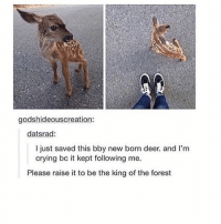 Deer, Black Twitter, and The Forest: godshideouscreation:  datsrad:  I just saved this bby new born deer. and I'm  crying bc it kept following me.  Please raise it to be the king of the forest aw