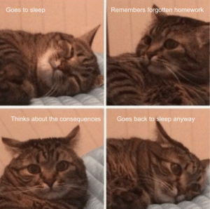 meirl: Goes to sleep  Remembers forgotten homework  Goes back to sleep anyway  Thinks about the consequences meirl