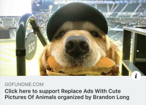 This is a campaign I can get behind: GOFUNDME COM  Click here to support Replace Ads With Cute  Pictures Of Animals organized by Brandon Long This is a campaign I can get behind