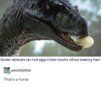 Memes, Horse, and Http: Golden retrievers can hold eggs in their mouths without breaking them  unclefather  That's a horse I thought it was a bee via /r/memes http://bit.ly/2FFGl5D