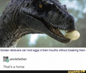 Horse, Can, and Them: Golden retrievers can hold eggs in their mouths without breaking them  unclefather  That's a horse  ifunny.co