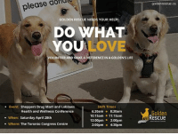 VOLUNTEERS NEEDED! Golden Rescue has been invited to bring our beautiful Goldens to the Shoppers Drug Mart and Loblaws Health and Wellness Conference. Each year their Pharmacists, Dieticians and Opticians gather for training. In between the training sessions the participants will have the opportunity to take a break and take advantage of that Golden therapy we all know and love!  This is an awareness event only, but for our participation, the event organizers will be making a donation to Golden Rescue. How awesome is that?!  We are looking to have volunteers for Saturday April 28th at The Toronto Congress Centre. We are looking to fill the following shifts: 6:30am - 8:30am 10:15am - 11:15am 12:00pm - 2:00pm 2:00pm - 4:30pm  If you and your Golden can spare a couple of hours, please email volunteer@goldenrescue.ca  Thank you!: goldenrescue.ca  please dofdc  GOLDEN RESCUE NEEDS YOUR HELP!  DO WHAT  YOU  LOVE  VOLUNTEER AND MAKE A DIFFERENCE IN A GOLDEN'S LIFE  Shift Times  6:30am 8:30am  10:15am 11:15am  12:00pm 2:00pm  2:00pm 4:30pm  Event: Shoppers Drug Mart and Loblaws  Health and Wellness Conference  Golden  Rescue  . When: Saturday April 28th  . Where: The Toronto Congress Centre  -About Second VOLUNTEERS NEEDED! Golden Rescue has been invited to bring our beautiful Goldens to the Shoppers Drug Mart and Loblaws Health and Wellness Conference. Each year their Pharmacists, Dieticians and Opticians gather for training. In between the training sessions the participants will have the opportunity to take a break and take advantage of that Golden therapy we all know and love!  This is an awareness event only, but for our participation, the event organizers will be making a donation to Golden Rescue. How awesome is that?!  We are looking to have volunteers for Saturday April 28th at The Toronto Congress Centre. We are looking to fill the following shifts: 6:30am - 8:30am 10:15am - 11:15am 12:00pm - 2:00pm 2:00pm - 4:30pm  If you and your Golden can spare a couple of hour