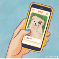 citruslucy:   i had a dream the other night that there was a tinder-like app where you just show appreciation for people's dogs  : Goldie  CITRUSLucy citruslucy:   i had a dream the other night that there was a tinder-like app where you just show appreciation for people's dogs
