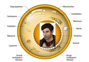 Smooth, Rough, and Cell: Golgi apparatus  Mitochondrion  Cytoskeletorn  Centrosome  Membrane  Cytoplasm  Vesicle  Ribosome  Nucleolus  Nucleus  Lysosome  Smooth  endoplasmic  reticulum  Rough  endoplasmic  reticulum Why is it that whenever we go somewhere I end up in a cell?