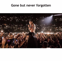 Memes, Never, and 🤖: Gone but never forgotten  .t ripchester
