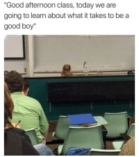 """Funny, Afternoon, and Good Boy: """"Good afternoon class, today we are  going to learn about what it takes to be a  good boy"""" 😂😂😂 