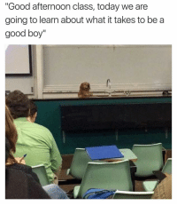 """Memes, 🤖, and Afternoon: """"Good afternoon class, today we are  going to learn about what it takes to be a  good boy"""" Finally a topic worth paying attention too! @douggiehouse 👈 with the 🔥🔥"""