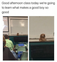 Class, Professor, and Afternoon: Good afternoon class today we're going  to learn what makes a good boy so  good  IG: OShitheadsteve Finally a professor who has my attention We Rate Dogs