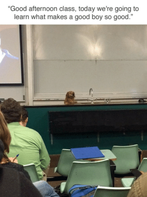 "Reddit, Target, and Tumblr: ""Good afternoon class, today we're going to  learn what makes a good boy so good."" tastefullyoffensive:  (via lowsodiumham)"