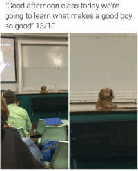 """Memes, Houston, and 🤖: """"Good afternoon class today we're  going to learn what makes a good boy  so good"""" 13/10  nd Them Good professor. (tw-rach houston) 